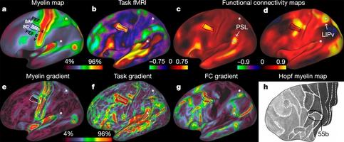 A multi-modal parcellation of human cerebral cortex