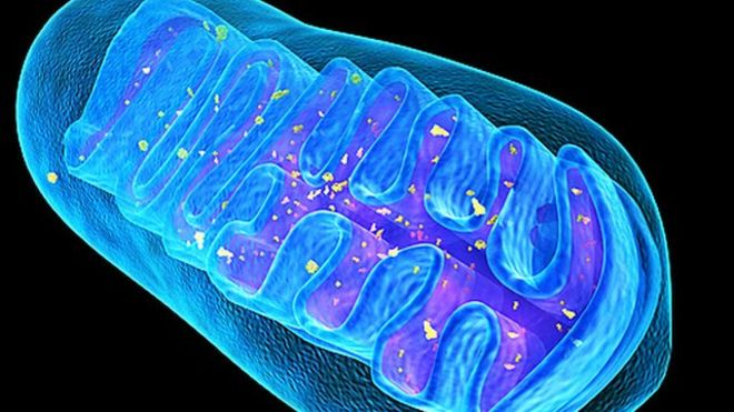 Mitochondria are the powerhouses of immunity
