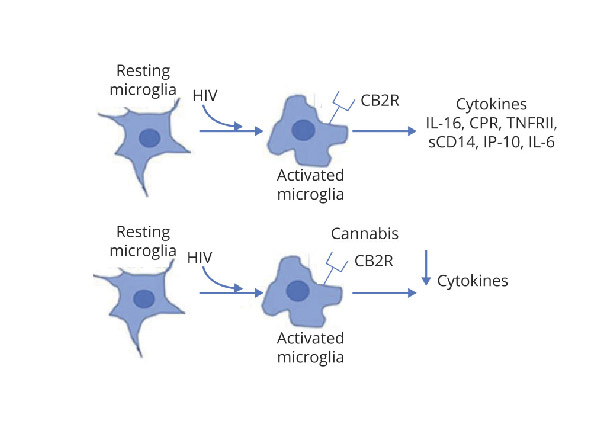 Recent cannabis use in HIV is associated with reduced inflammatory markers in CSF and blood.
